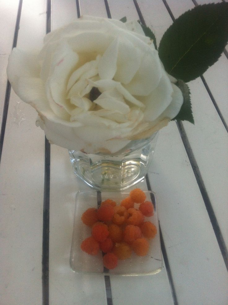 Yellow raspberries and white roses. Not enough for jam, maybe next year.