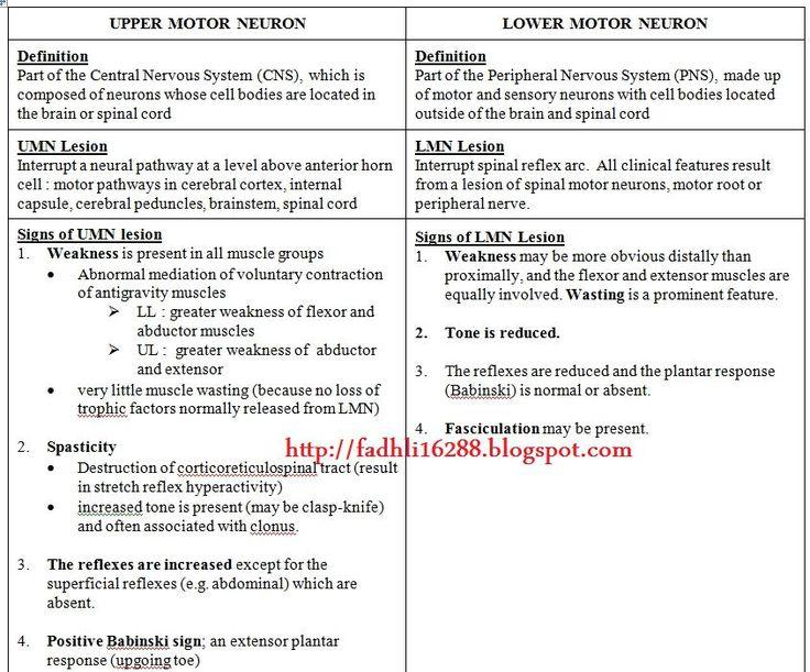 upper motor neuron vs lower motor neuron ~ medik-ukm