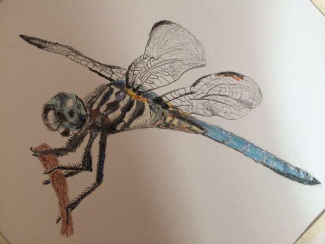 Vážka, kresba tužkou a pastely od Zuzky Dušánkové