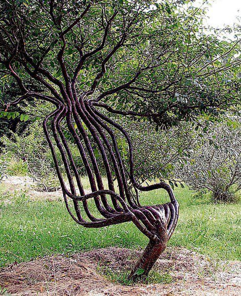 A Chair From a Living Tree !! Australian designers Peter Cook and Becky Northey use the Pooktre method to shape trees into unusual structures such as this chair.