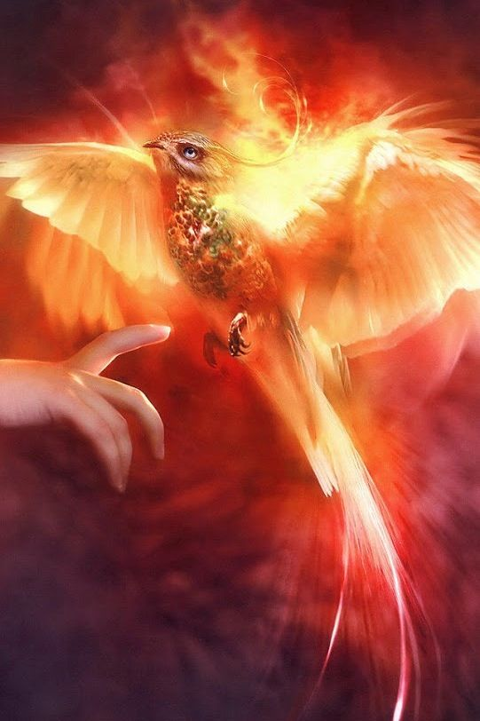 Phoenix Spirit -Brings rebirth, renewal & eternal protection - artist? Detail (No link)