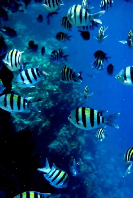 Egypt, zebra fish!