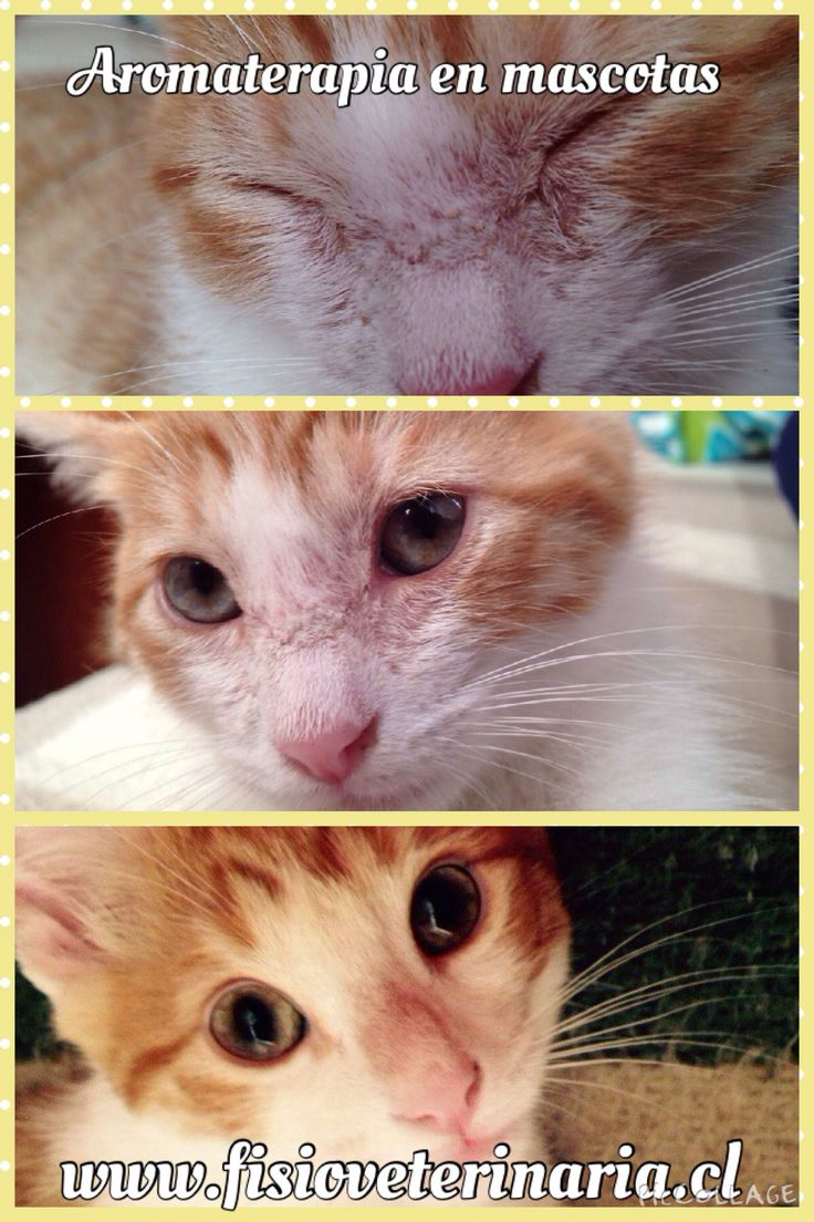 Uso de aromaterapia en veterinaria