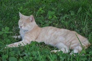 Onze kater Simba verdween 29 oktober te Bever ( Vlaams-Brabant). Hij droeg een groen bandje. Hij is 3 jaar oud, gecastreerd maar niet gechipt. Bij info 054/328906 of 0486/511575