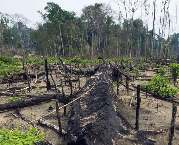 Brésil : la déforestation en Amazonie en hausse de 28% sur un an - La déforestation de l'Amazonie brésilienne a atteint sur un an 5843 km2. Autrement dit, les... - Le Parisien