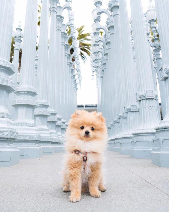 12 perritos que conquistarán tu corazón