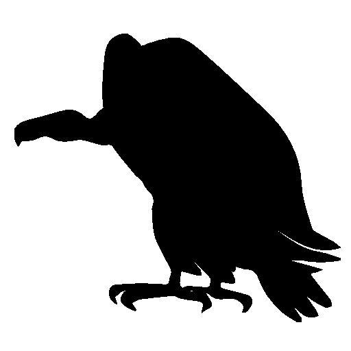 26 Best Buzzard Images On Pinterest Vulture Buzzard And