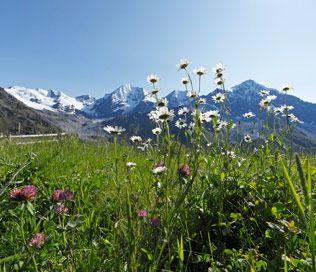 Zomervakantie in Zuid-Tirol!