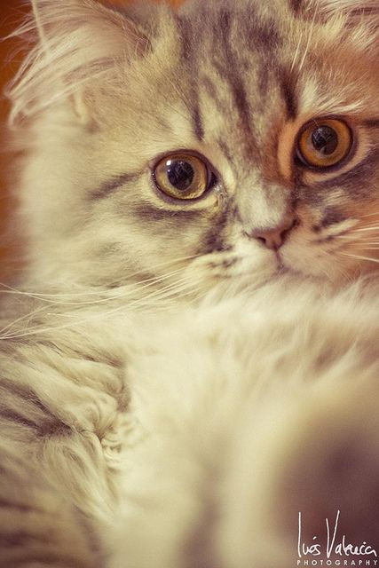 Gaspar IV   Flickr - Photo Sharing!