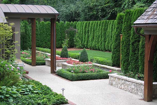 Rows of evergreen arborvitae create a green fence via for Evergreen climbing plants for privacy
