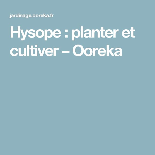 Hysope Planter Et Cultiver Ooreka Hysope Thym Plante
