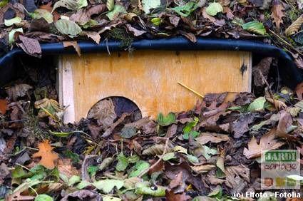 En cette fin octobre et tant que les températures restent douces, il n'est pas rare de croiser la route d'un hérisson en quête d'un abri pour passer l'hiver au chaud. Aidons ces petits mammifères si utiles au jardinier en leur aménageant un petit coin douillet. :) Merci pour eux. http://www.jardipartage.fr/abri-pour-herisson-hiver/