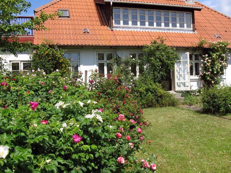 Stuehuset set fra rosenhaven, hvor der vokser et væld af forskellige rosensorter.