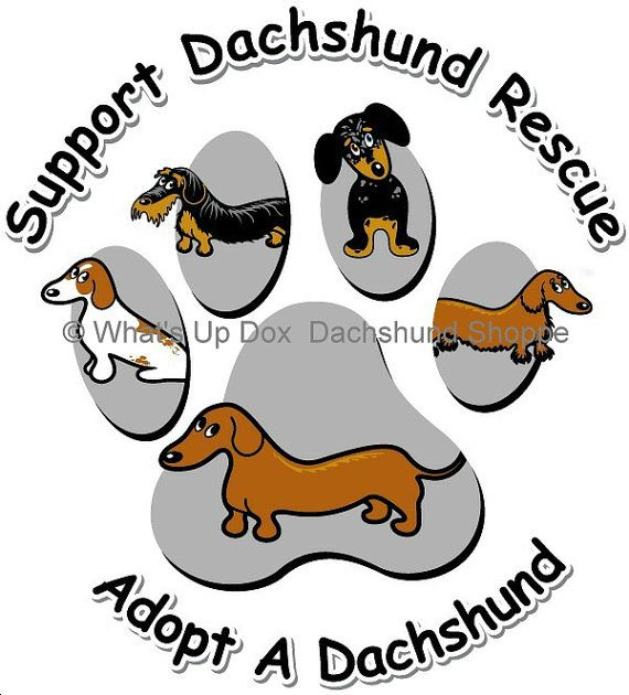Support Dachshund Rescue T-Shirt Available in 2 Fit by whatsupdox