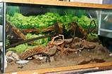 Hermit Crab Habitat - - Yahoo Image Search Results