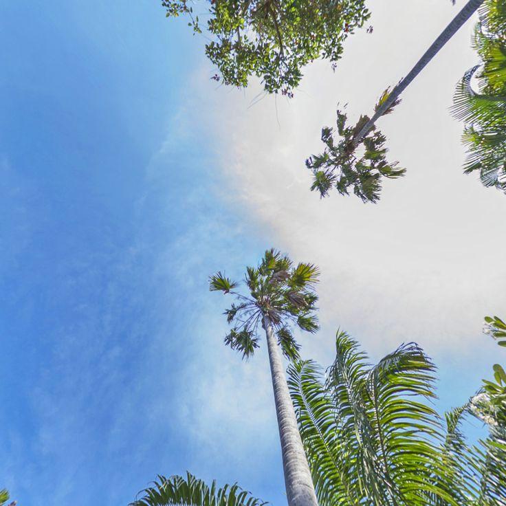 Reasons to come to Kubu #18: Sunny skies, swaying palms and tropical sunshine. ☀️🌴❤️  www.villakubu.com  #villakubu #seminyak #luxury #balivilla #islandlife #love #wanderlust #sanctuary #tropicalparadise