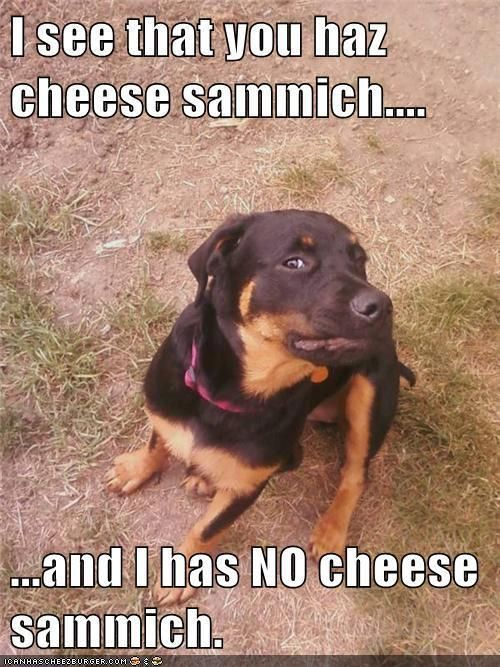 And I LOVE LOVE LOVE cheese sammiches... Does your dog give you the evil eye when you're eating... especially if you don't share?: