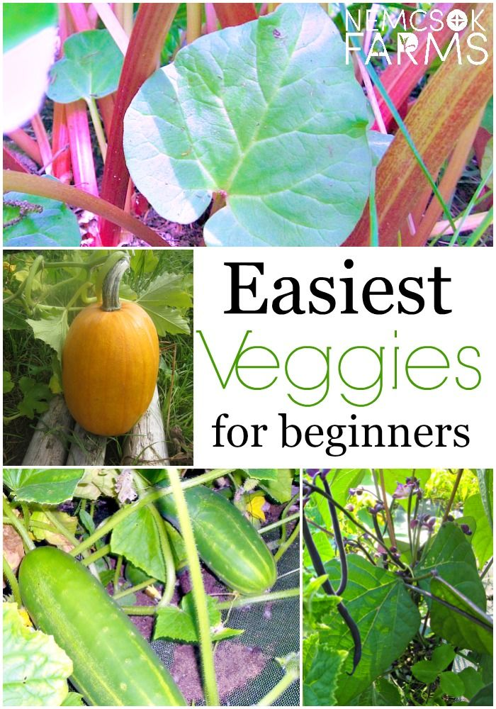 27 Best Images About Gardening For Beginners On Pinterest
