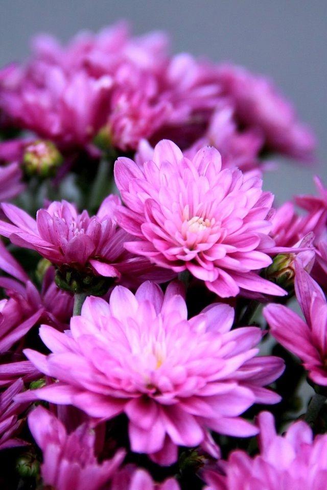 Цветы hd обои на телефон