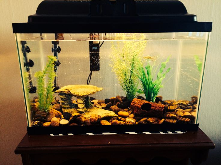 17 best images about aquarium on pinterest stockings for 10 gallon fish tank stocking ideas
