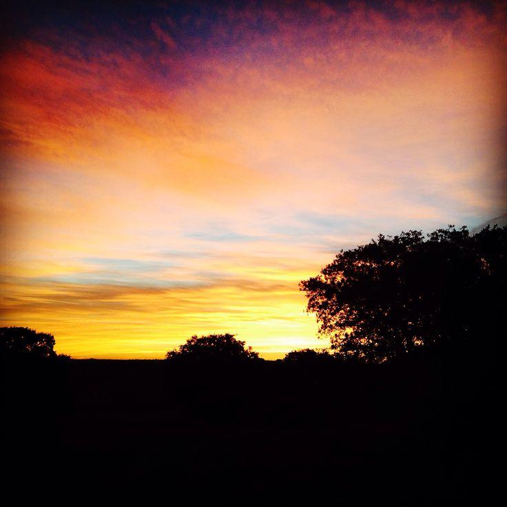 Saliendo el sol #buenosdias feliz sábado familia #campo #caza #palomas #doves #hunter #hunting #pasiónmorena #pasionporelcampo