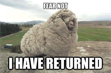 Fear not I have returned Shrek the Sheep