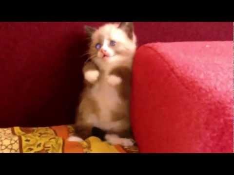 Χαριτωμένο γατάκι φοβάται. Cute Kitten Afraid