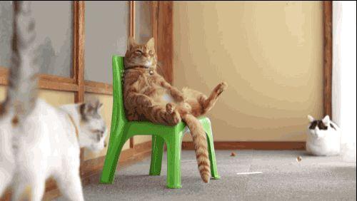 Brasilianische Katze guckt WM @Norbert Windeck