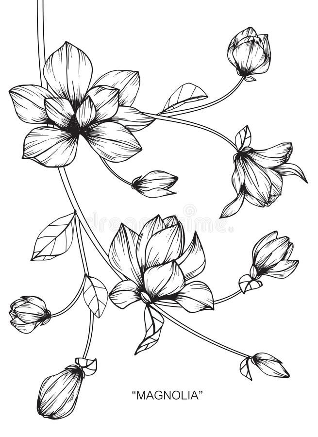 Southern Magnolia Sketches Google Search Flower Drawing Floral Drawing Black And White Artwork