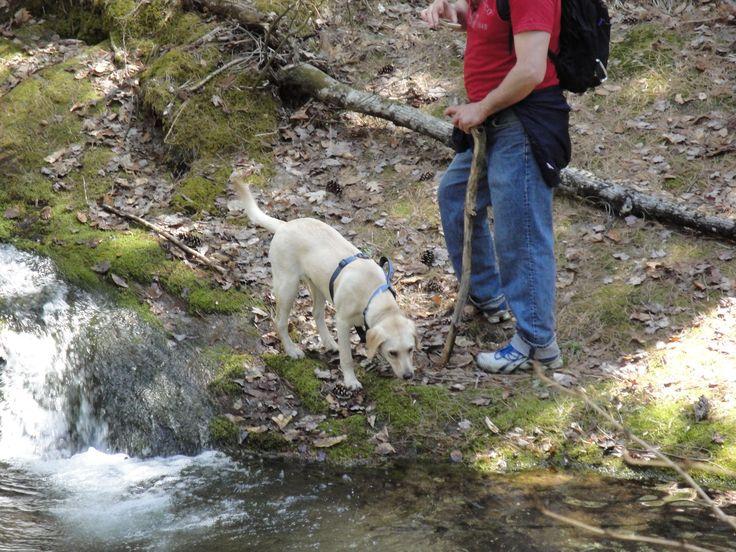 Walnut Creek Dog Friendly Hotels