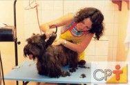 Banho e tosa em cães: habilidades do tosador