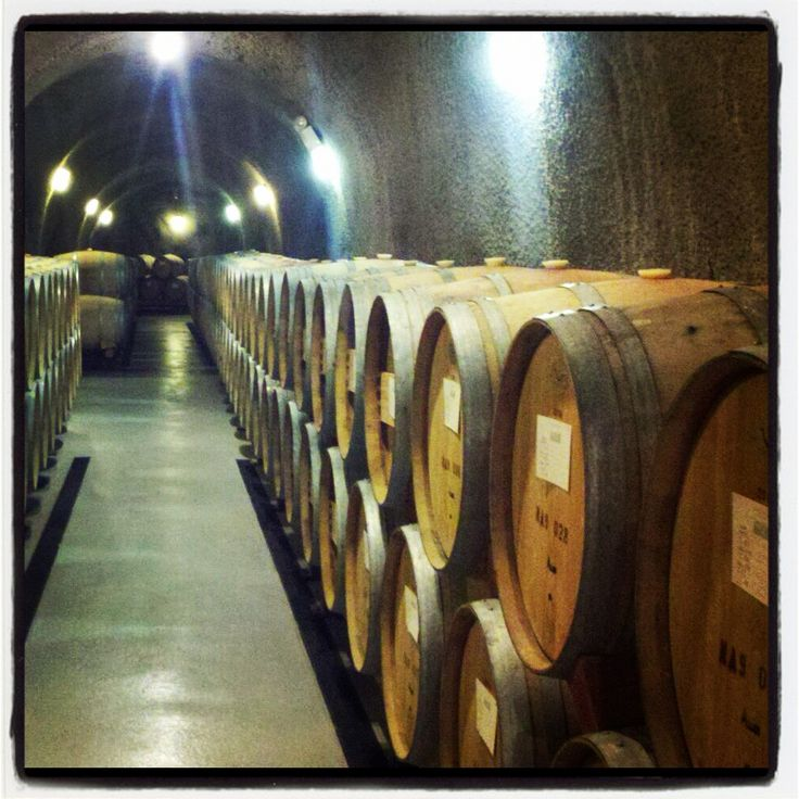 barrels of yummy wine in Stags Leap