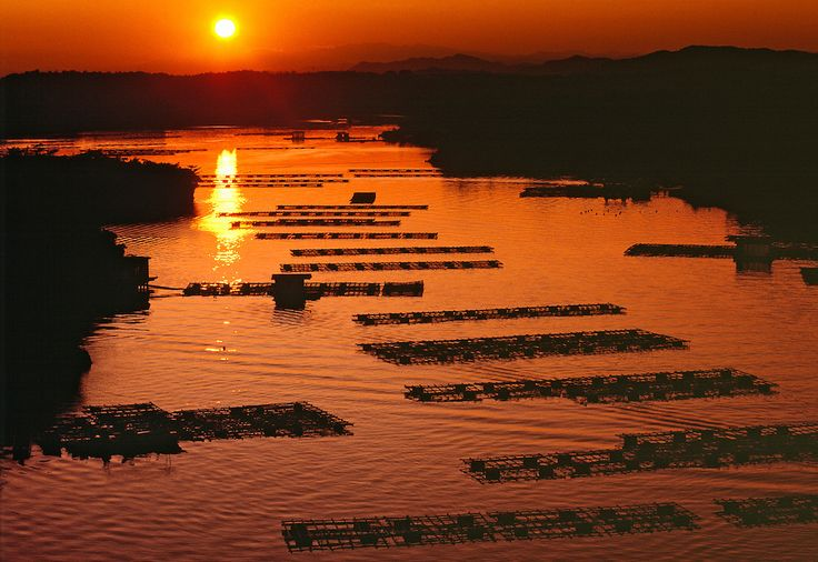 A setting sun silhouettes the oyster beds at Kashikojima, Honshu, Japan.