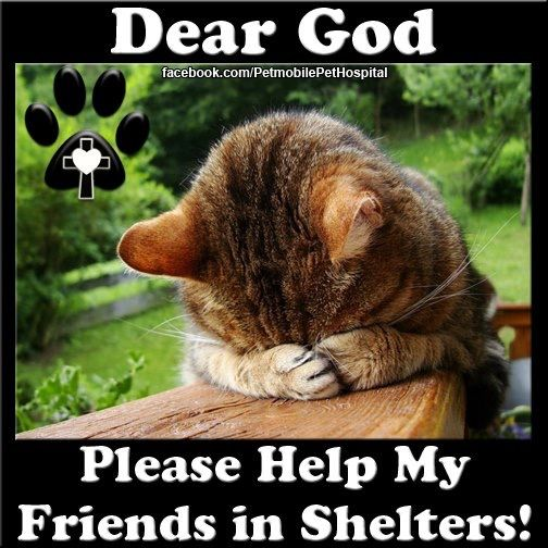 ADOPT - FOSTER - SAVE LIVES ❤️❤️