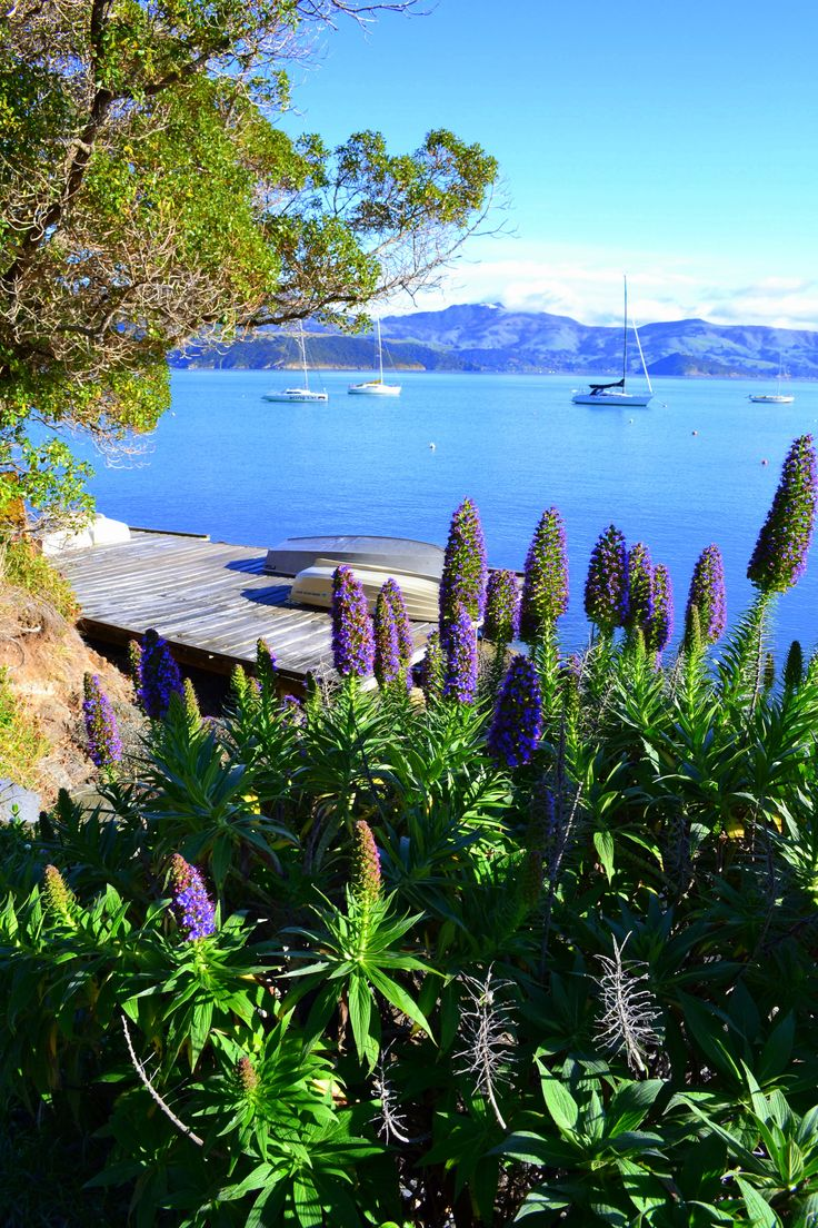 Akaroa, near Christchurch, South Island, NZ