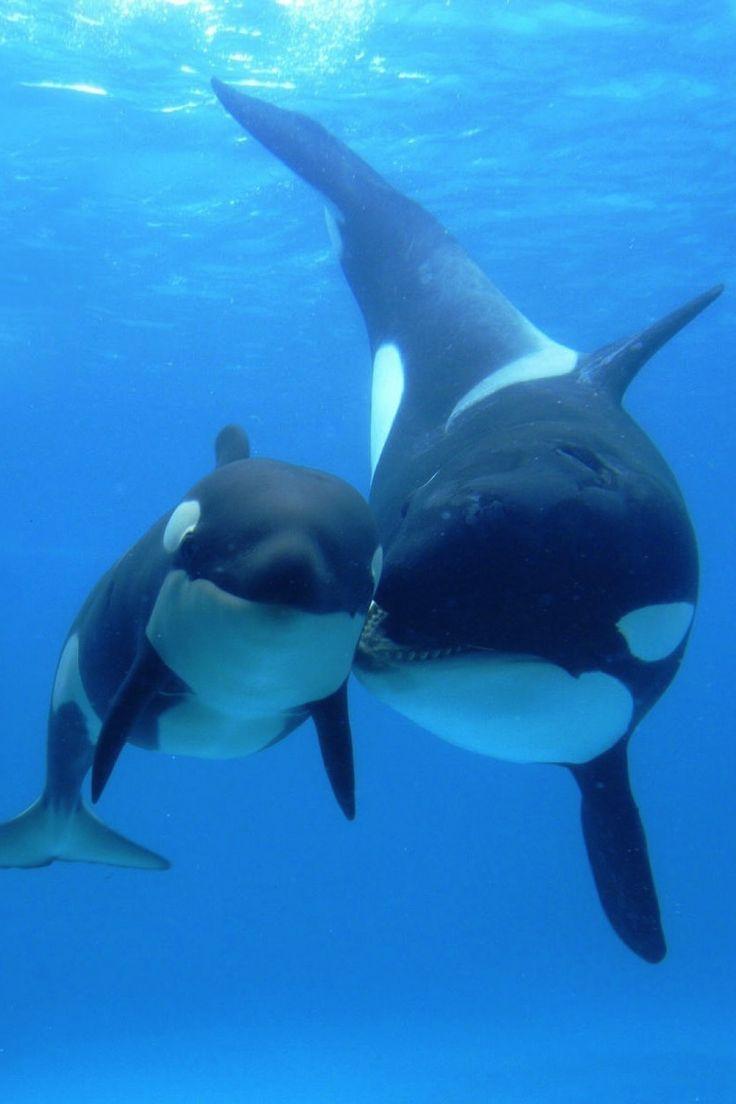 best 25 dolphin mammal ideas on pinterest whale mammal water
