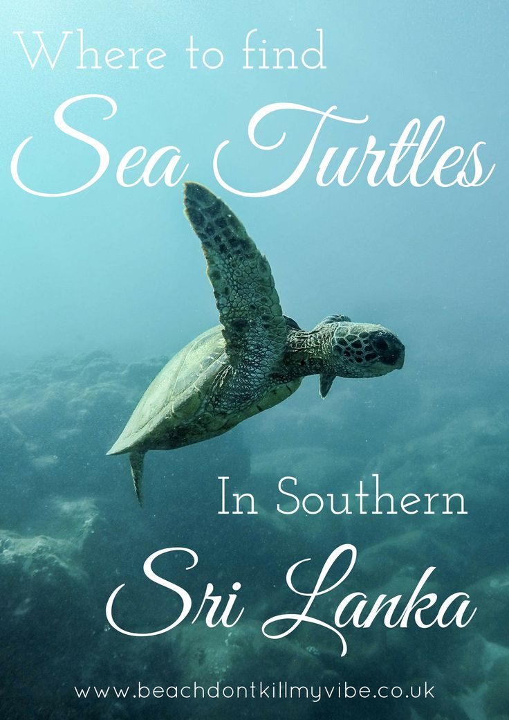 Where to swim with sea turtles in Southern Sri Lanka!  #backpacking #asia #Srilanka #traveltips #solofemaletravel #travel #Seaturtle