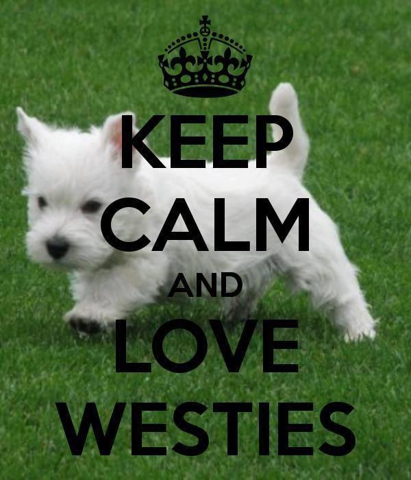 Love Westies                                                                                                                                                                                 More