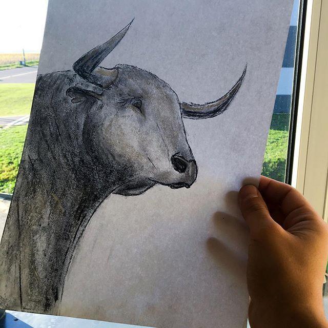 Soucasti Vystavy Bude I Koutek Pro Me Kresby Tento Byk Je Kresba