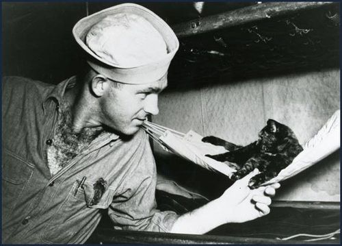"""""""Carriers and other vessels got infested with rodents. So cats were not just moral boosters (which they very much were) they were also working members of the crew. Some have even been immortalized for surviving multiple attacks on their ships, etc. Military dogs have been recognized for the important roles they've played but I think cats kinda get lost in the shuffle of military animals sometimes."""""""