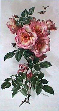 Old fashioned beauties American Rose Artists -- Roses in Art
