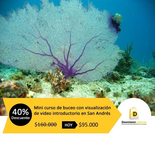 Déjate seducir el mundo submarino y adquiere esta oferta de buceo en San Andrés. Visita Downtown.com.co