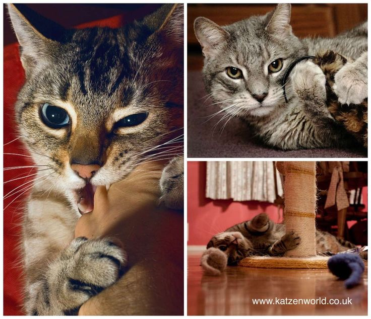 look at this fantastic photo from Katzenworld  http://katzenworld.co.uk/2015/04/29/guest-post-bring-up-a-perfect-cat/
