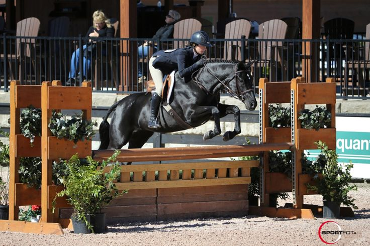 New Orleans - Hanoverian - Hunter Horse For Lease or Sale