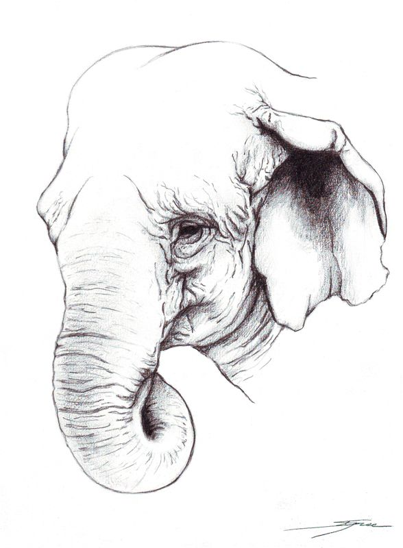 Hindu Elephant Drawing | Elephant Indian Drawing Indian Elephant Pencil by