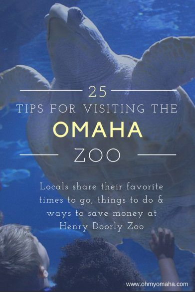 Expert Tips For Visiting Omaha's Zoo