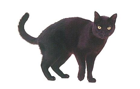 Black cat sibling: Salem Saberhagen.
