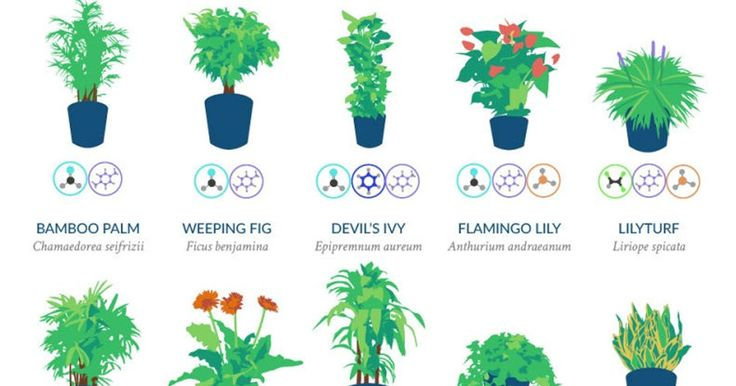Plants to purify the air in your home