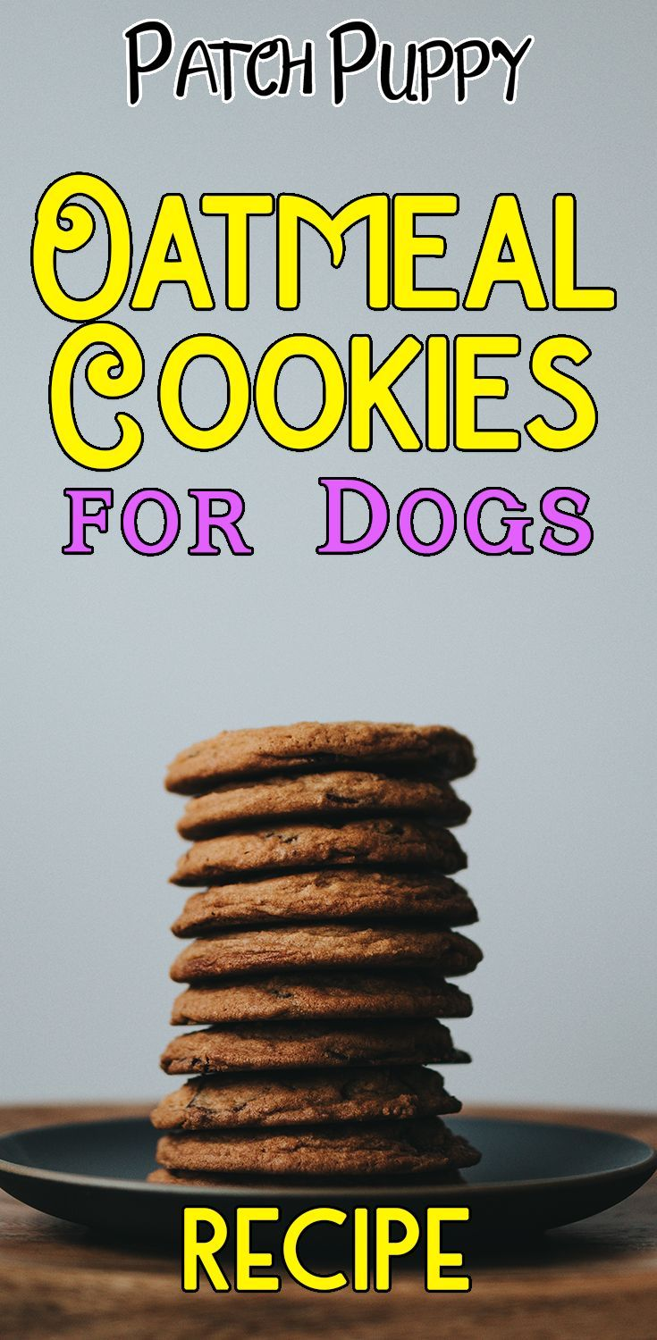 Which Of These 16 Healthy Dog Treat Recipes Will Your Dog Like The