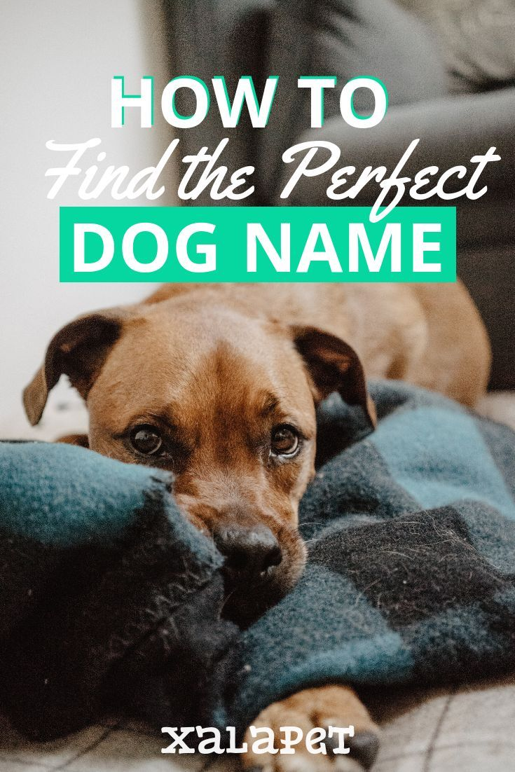 Choosing A Name For Your Dog Is A Huge Decision These Tips Will